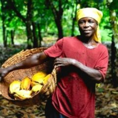 AN INTRO TO THE CAMEROON COCOA AGRO-FORESTRY SECTOR | THE STATUS QUO